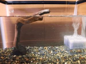 アクアリウム-水草水槽-流木石組レイアウト-レイアウト方法-川辺-石-自然採取-親石流木-接着-完成-水槽内設置-別アングル