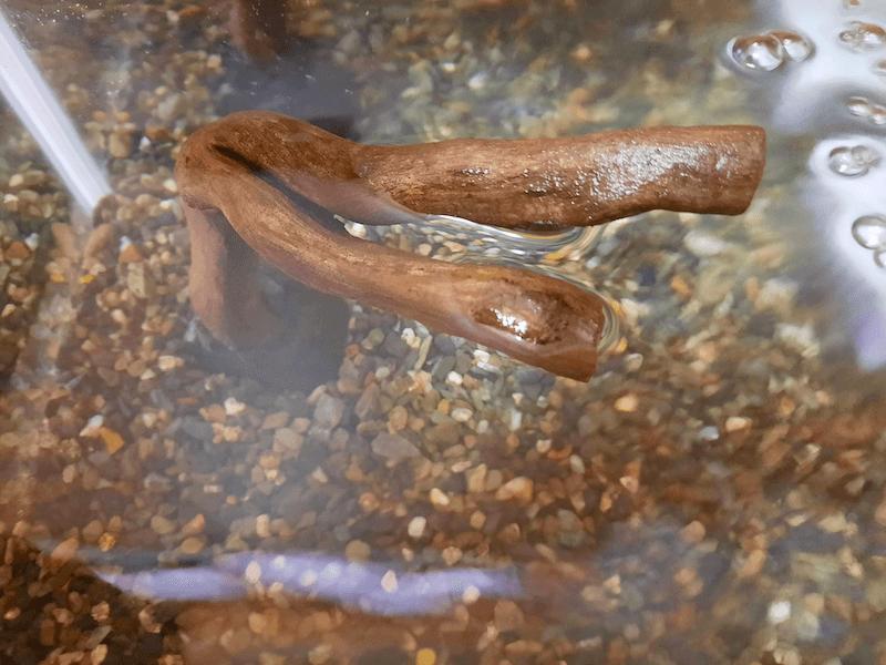 アクアリウム-水草水槽-流木石組レイアウト-レイアウト方法-川辺-石-自然採取-親石流木-接着-完成-水槽内設置