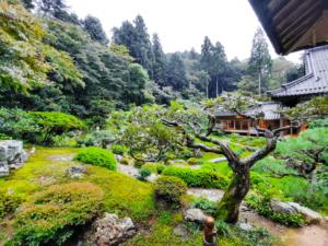 滋賀県米原市-青岸寺-喫茶去kissa-ko-国指定名勝青岸寺庭園-雨の日