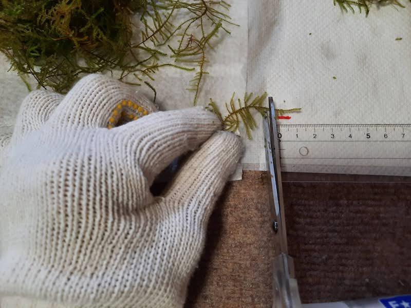 水草-活着-アクアリウム-水草水槽-石組みレイアウト-流木レイアウト-制作-ウィローモス-モス-カット-トリミング