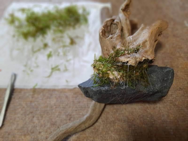 水草-活着-アクアリウム-水草水槽-石組みレイアウト-流木レイアウト-制作-ウィローモス-モス-活着表
