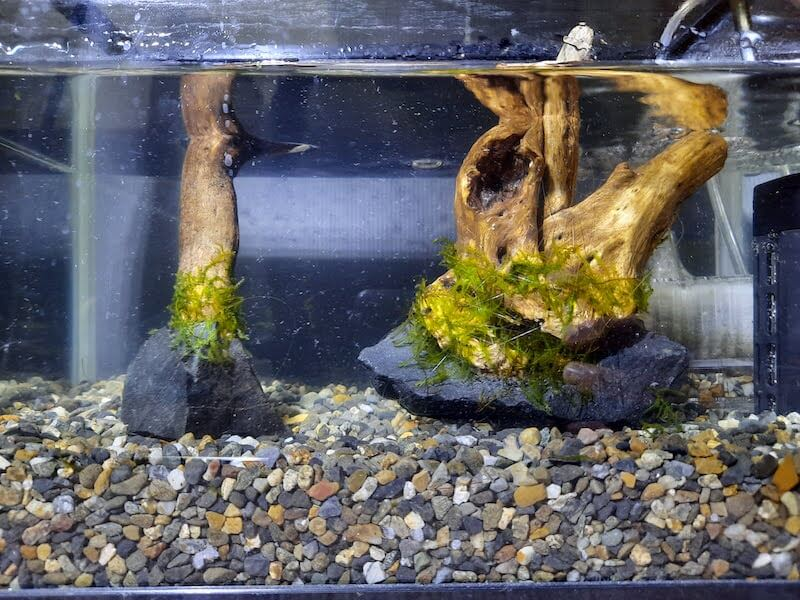 水草-活着-アクアリウム-水草水槽-石組みレイアウト-流木レイアウト-制作-ウィローモス-モス-活着-完了後